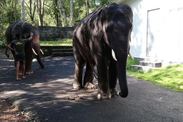 Экскурсия в питомник для слонов