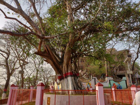 Дерево премы Господа Чайтаньи
